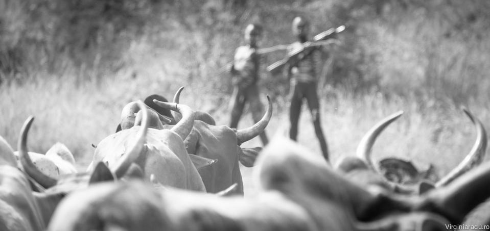 Inca de la varse fragede, baietii sunt invatati sa aiba grija de bovine