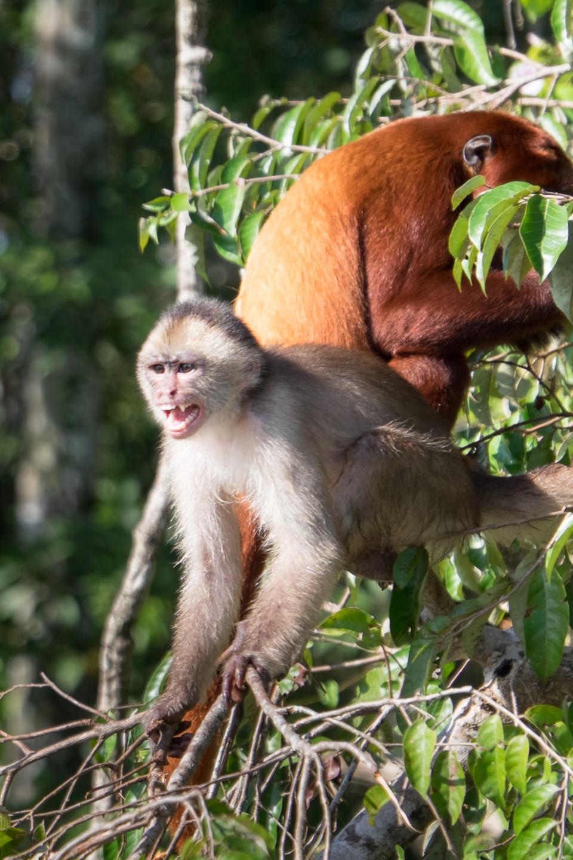 Maimute de tot felul. Unele mai prietenoase, altele mai putin