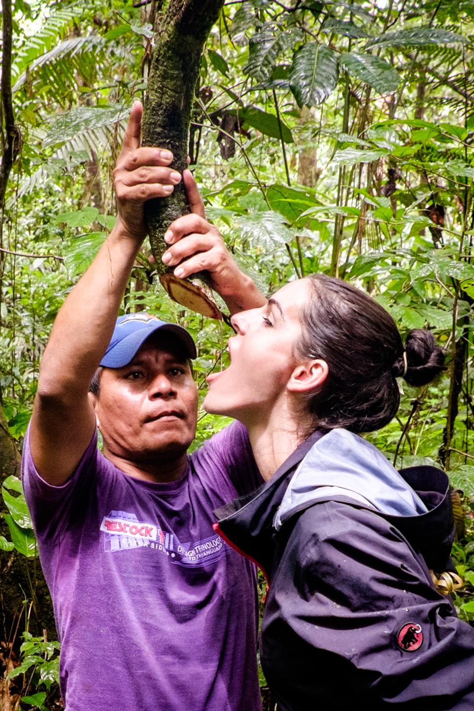 Cum sa nu mori de sete in jungla