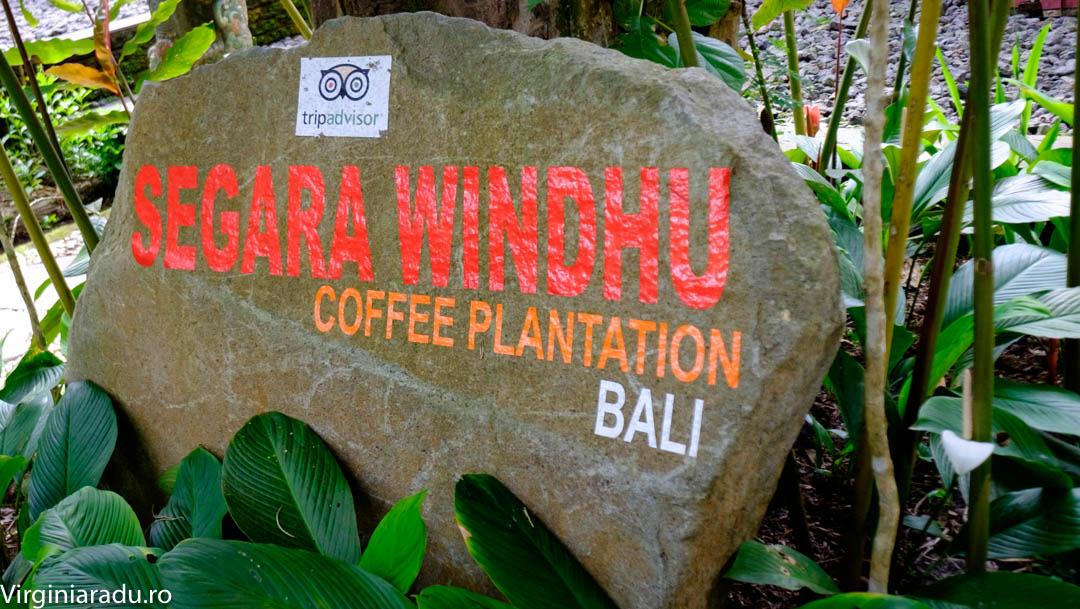 Segara Windhu plantation. Un loc in care pot sa degusti diverse tipuri de cafea, pe gratis. La intrare te intampina un ghid, care iti prezinta tipurile de cafea pe care ei le cultiva. La final, poti cumpara cafea sau ceai, dar nu e obligatoriu